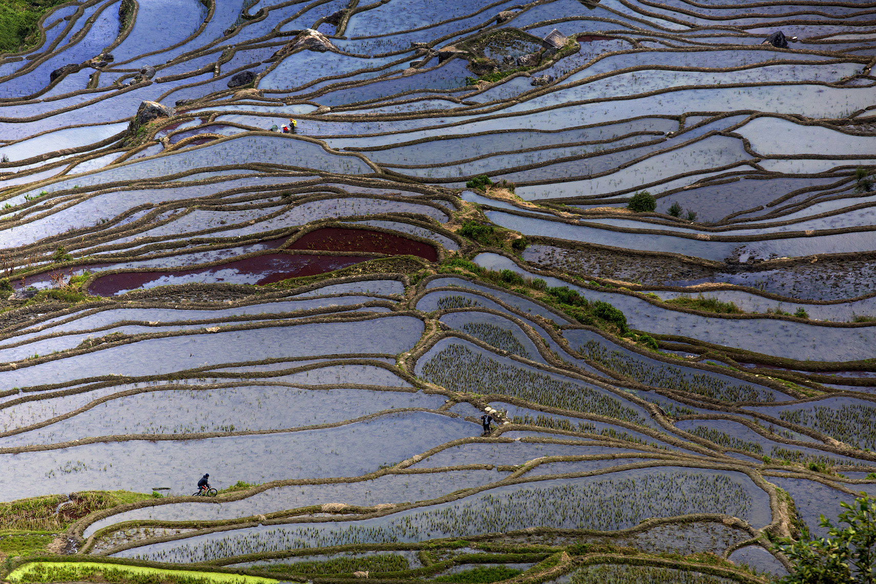 12_rice_terraces_jussi_grznar-0596-clr-cp-web