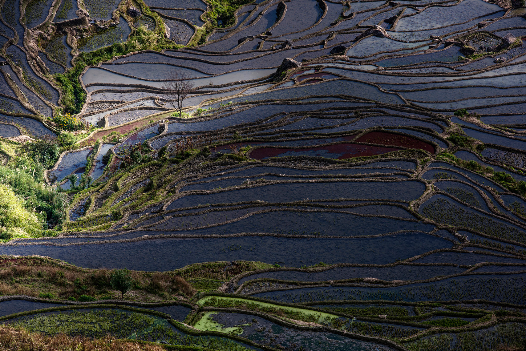 14_rice_terraces_china_jussi_grznar-0163